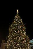 The Main Kyiv's New Year Tree On Sophia Square In Kyiv, Ukraine