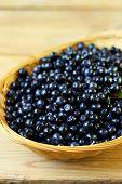 Bilberry, Whortleberry