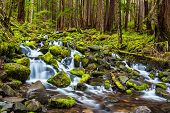 image of olympic mountains  - cascade waterfall in Olympic national park WA US - JPG