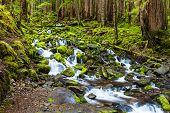 picture of olympic mountains  - Cascade waterfall in rain forest Olympic national park - JPG