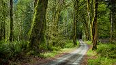 pic of olympic mountains  - deep forest in Elwha River Trail Olympic national park - JPG