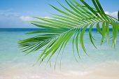 Palm leaf, blue sea and tropical white sand beach ander the sun
