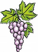 Grapes (Vector)