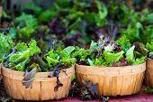stock photo of farmer  - baskets of fresh salad in farmer market - JPG