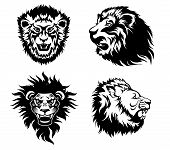 stock photo of growl  - Illustration of the head of a growling  lions - JPG