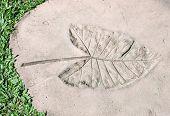 Leaves Imprint