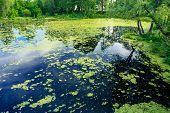 Wild Bog Swamp.