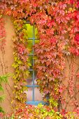 Fall Foliage Adorning A New Mexico Window