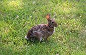 Rabbit Waiting