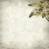 stock photo of bethlehem star  - textured old paper background with start of bethlehem flowers - JPG