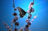 stock photo of blue butterfly  - Colorful black butterfly with blue and yellow on it - JPG