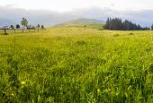 picture of early morning  - Grass with dew on a mountain pasture in the early morning on a background of mountains. Carpathian Mountains. ** Note: Visible grain at 100%, best at smaller sizes - JPG