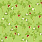 pic of strawberry plant  - Strawberry plant with flowers and berries seamless pattern - JPG