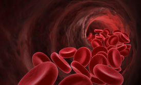 picture of red blood cells  - Red Blood Cells - JPG