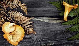 pic of chanterelle mushroom  - chanterelle mushrooms and grass  on the wooden background   - JPG