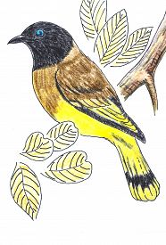image of bulbul  - The original drawing of birds on white paper Black - JPG