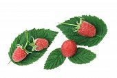 Raspberries With Green Leafs