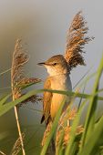 Portrait Of A Warbler