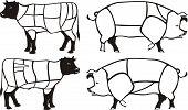 Pork & beef diagrams
