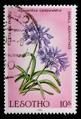 Lesotho - Circa 1985: A 10-sente Stamp Printed In The Kingdom Of Lesotho Shows Flowers And Plant Of