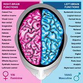 foto of left brain  - Ilustration body part - JPG
