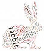 Wordcloud of rabbit