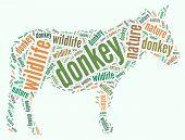 Wordcloud of donkey