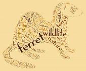 Wordcloud of ferret
