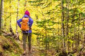 Autumn hike backpacker lifestyle woman walking on trek trail in forest outdoors with yellow leaves f poster