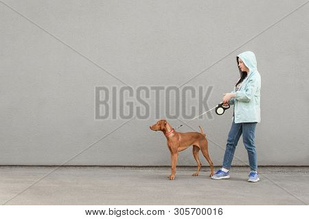 poster of Girl And Dog On A Leash Are Walking Against The Background Of A Gray Wall. Owner Walks The Dog On A