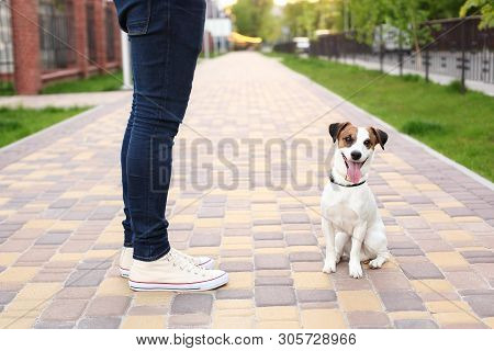 poster of A Man And A Dog Walk In The Park. Sports With Pets. Fitness Animals. The Owner And Jack Russell Are