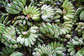 Sale Of Freshly Cut Green Bananas. Fresh Fruit. Sale Of Bananas. Street Bazaar. Bunch Of Bananas. As poster