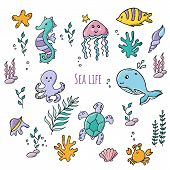 Colorful Set Of Various Sea Creatures And Sea Plants poster