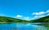 Landscape Lake. Beautiful Wild Nature, Forest. Lake With Mirror Reflections On Sunny Day. Summer Lak poster