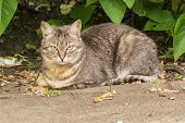 Cute Cat Lying In The Garden And Looking At The Photographer. Against The Background Of Bright Green poster