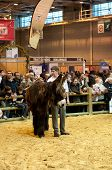 Paris - February 26: Ass Animal Competition At The Paris International Agricultural Show 2012 On Feb