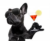 Cool Drunk French Bulldog  Dog Cheering A Toast With Martini Cocktail Drink , Looking Up To Owner ,  poster
