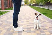 A Man And A Dog Walk In The Park. Sports With Pets. Fitness Animals. The Owner And Jack Russell Are  poster