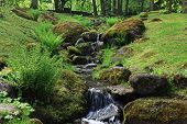 Forest Stream. Mountain Stream Among The Green. Mountain Stream Among The Mossy Stones poster