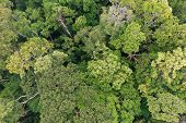 Rainforest trees forest aerial photo poster