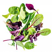 Salad Mix With Rucola, Frisee, Radicchio, Chard And Lambs Lettuce. Green Salad Isolated On White Ba poster