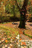 Beautiful Forest Area