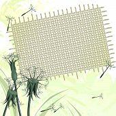 Dandelions and sackcloth
