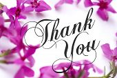 pic of thank you  - Thank You card with pink phlox background and elegant script text - JPG