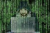 Anonymous Person/troll In Hooded Sweatshirt Sits In Front Of Computer.hacker Works With Laptop.he Ha poster