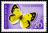 Postage stamp Romania 1969 Eastern Pale Clouded Yellow, Butterfl