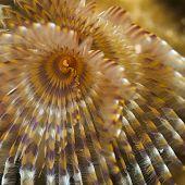 Un gusano plumero