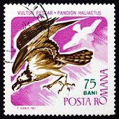 Postage stamp Romania 1967 Osprey, Bird of Prey