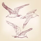 foto of naturalist  - seagulls set hand drawn vector llustration realistic sketch - JPG
