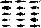 stock photo of freshwater fish  - Vector silhouettes of sea and river fish - JPG